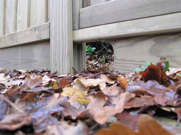 Jacksons Fencing hedgehog friendly gravel board close up in autumn leaves